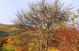Posof'ta Üç Mevsim Bir Arada
