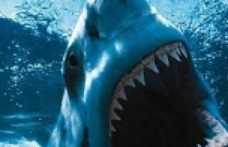 Şok! Köpek balığı faciası...