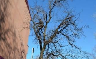 İki Gündür Ağaçta Mahsur Kalan Kedi Kurtarıldı
