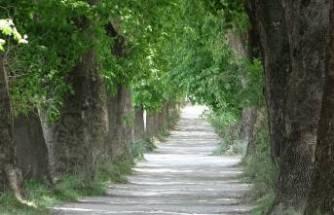 Bu yol Bursa'da! Yürümek için Türkiye'nin her yerinden geliyorlar