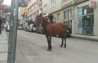 Bursa'da başı boş at paniği! Altıparmak Caddesinde...