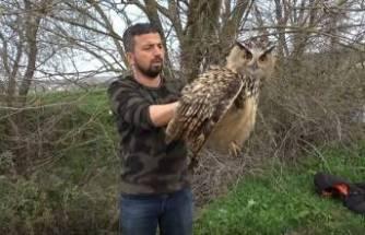 Bursa'da nadir görülen yırtıcı kuşu ölümden kurtardı