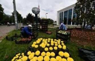 Osmangazi çiçeklerle renklendi