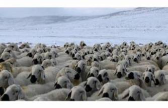 Sivas'ta kar sürprizi