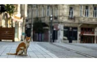 Sokağa çıkma yasağı devam etmeli mi? Prof. Dr. Mehmet Ceyhan cevap verdi