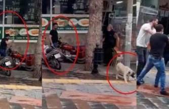 Köpeği sopayla döven kişiye, barınakta hayvanlara bakma cezası