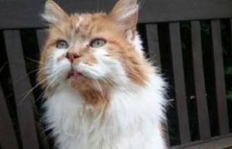Dünyanın en yaşlı kedisi öldü