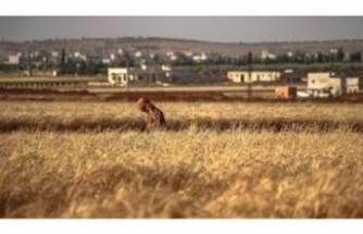 """""""Esad rejimi zorunlu askerliği reddeden 100 kişiyi mayın tarlasına sürdü"""" iddiası"""