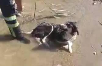 Gölde mahsur kalan köpeği itfaiye kurtardı