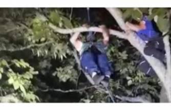 Ağaçta mahsur kaldı, AFAD kurtardı