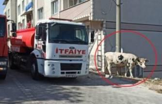 Bursa'da alevlerin sardığı samanlıktaki inek kurtarıldı