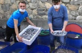 Bursa'da balık tezgahında yavru hamsi isyanı