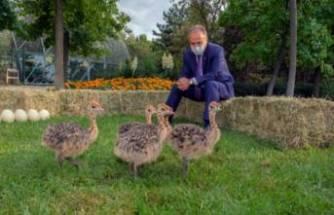 Bursa Hayvanat Bahçesi yeni üyelerle büyüyor