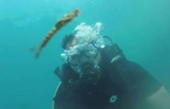 Van Gölü'nde yeni bir canlı türü görüntülendi!