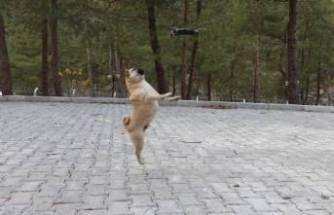 Bursa'da köpeklerin drone ile imtihanı