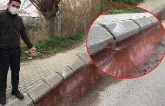 Sokak ortasından akan kanlı su paniğe neden oldu!