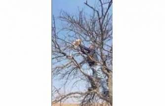 Bursa'da ağaçta mahsur kalan kediyi vatandaşlar kurtardı