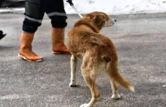 Osmangazi Belediyesi tümörlü köpeği sağlığına kavuşturdu