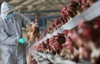 Rusya'dan H5N8 açıklaması! İlk kez insanlarda tespit edildi ...