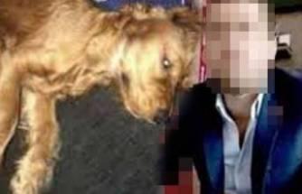 Emanet edilen köpeğe cinsel istismar iddiasında iddianame düzenlendi!