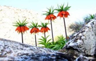 Bu çiçeği koparana 60 bin lira ceza!
