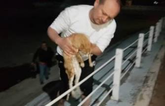 Bursa'da gölete düşen kediyi kurtardı!