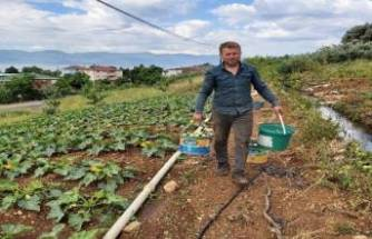 Bursa'da mevsimin ilk kabağı hasat edildi