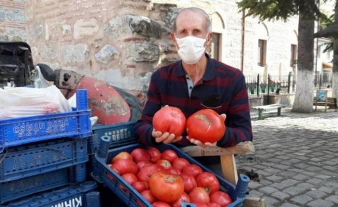 Bursa'da üretilen Osmanlı domatesi rekor kırdı