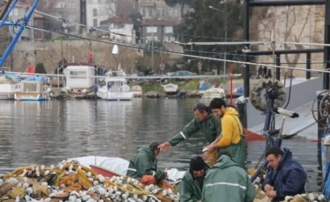 "Sinop Limanı'nda ""oksail"" Avı"